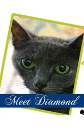 Meet Diamond | DSH