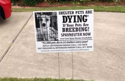 Animal advocates team up to reduce pet overpopulation in New Orleans' upper 9th Ward with one-day spay-neuter marathon