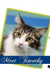 Meet Timothy | DLH