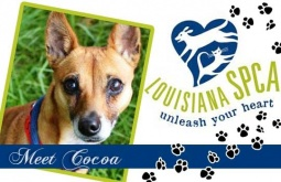 Meet Cocoa | Terrier Mix