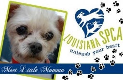 Meet Little Momma | Maltese mix