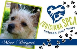 Meet Beignet | Terrier mix