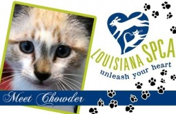 Meet Chowder | DSH