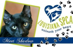 Meet Shadow | DSH