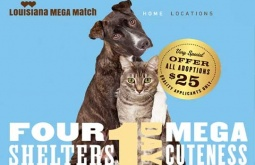 Fours shelters. One day. Support the LASPCA's goal of 175 adoptions at the 'Mega Match-a-thon,' October 19
