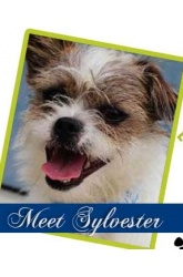 Meet Sylvester | Terrier Mix
